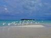 Sandbank-HIGH