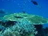 underwater-north-male-atoll